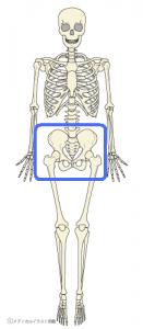 骨盤の仕組み、身体に与える影響、足のトラブルとの関係