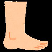 高齢者の歩行状態と足首の関係①